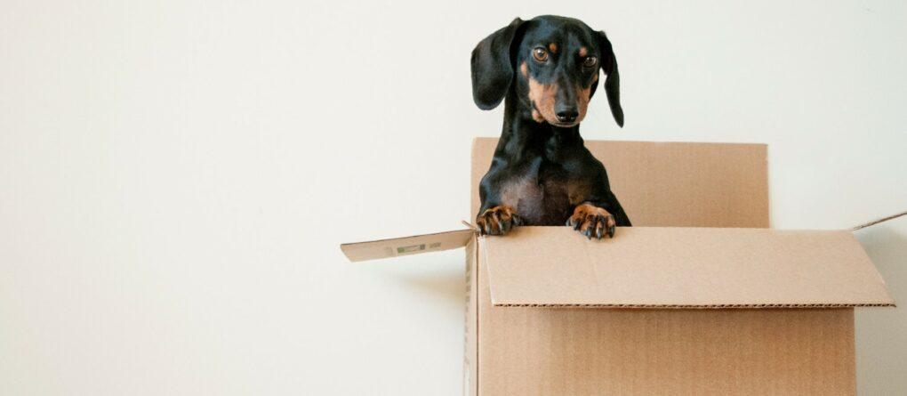 Comment organiser le déménagement de mon activité libérale ?